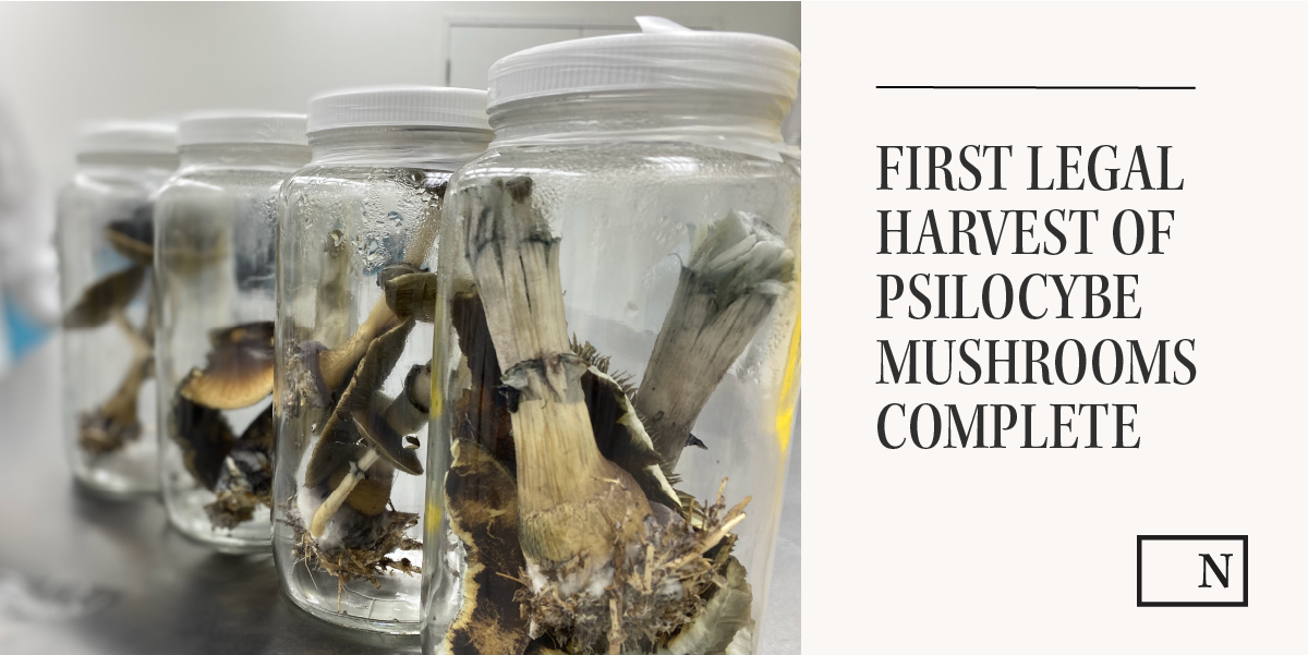 first legal harvest of psilocybe mushrooms complete